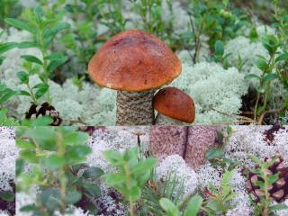 обои Кривое зеркало грибов фото