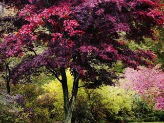 обои Разноцветная краса весеннего дерева фото