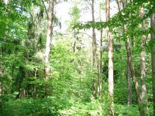 обои Зеленый дремучий лес фото