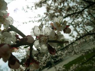 обои Весна пришла,   всё цветёт фото