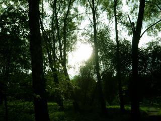 обои Парк в лучах солнца фото