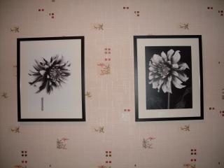 обои Две хризантемы фото