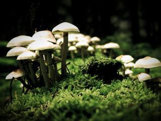 обои Много грибов фото