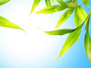 обои Зеленые листья на фоне голубого неба фото