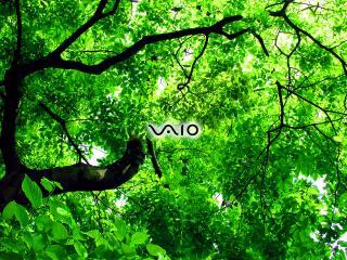 обои VAIO на фоне дерева фото