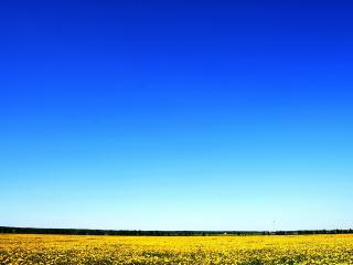 обои Желтый ковер и голубое небо фото