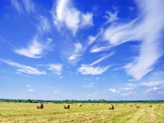 обои Перистые облака над полем фото