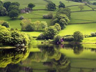обои Красивый летний пруд, возле лужайки фото