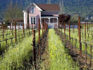 обои Napa Valley Vineyard,   California фото