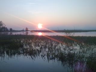 обои Восход летнего солнца над прудом фото