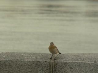 обои Маленькая птичка фото