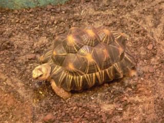 обои Красивая черепаха фото