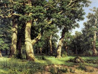обои Дубовая роща. 1887, холст, масло, 1250х193 см фото