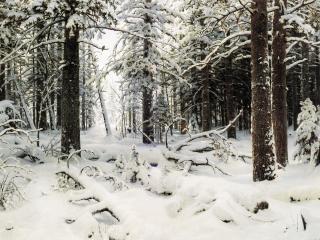 обои Зима. 1890, холст, масло, 126х204 см фото