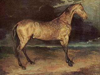 обои Конь во время грозы фото