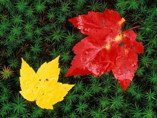 обои Желтый и красный осенние листья фото
