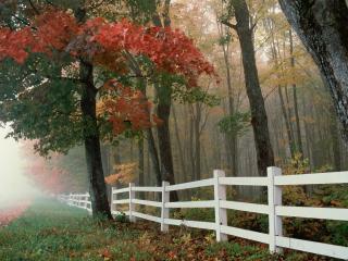 обои Осеннее окружение фото