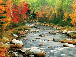 обои Осень на ручье, Белые горы, Нью-Гэмпшир фото