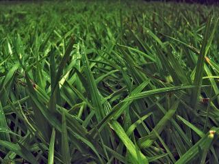 обои Трава в утренней росе фото