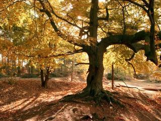 обои Осенний сквер фото