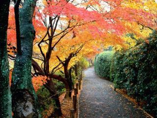 обои Autumn Colors, Kyoto, Japan фото