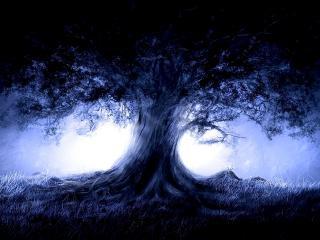 обои Старый дуб под луной фото
