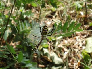 обои Опасный паук фото