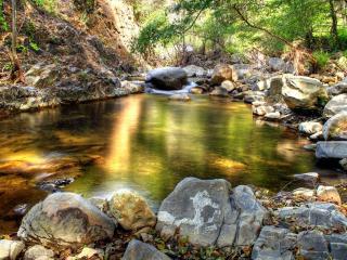 обои Весенний лесной ручей, с отблесками солнца фото
