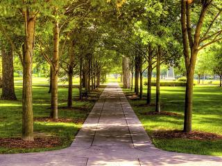 обои Летний парк залитый солнцем фото