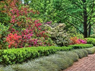 обои Цветочная изгородь у садовой дорожки фото