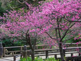 обои Весенние фруктовые деревья в цвету фото