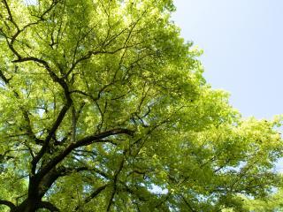обои Верхушки весенних деревьев фото
