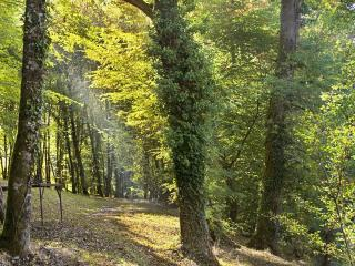 обои Лесной сквер фото