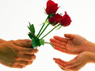 обои 3 Розы для тебя фото
