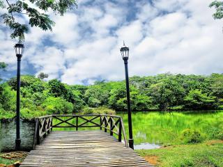 обои Пруд в зеленом парке фото