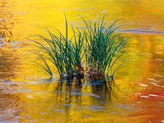 обои Летняя растительность на пруду фото