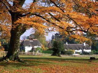 обои Дерево на окраине села  осенью фото