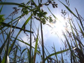 обои Вид на солнце из травы фото