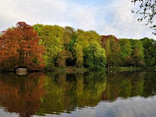 обои Река и лес фото