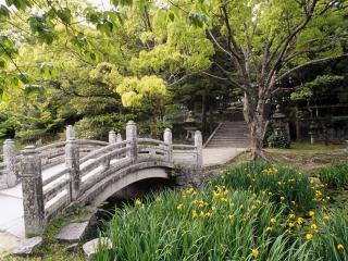 обои Мостик в зеленом парке фото