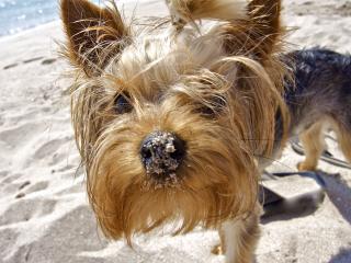 обои Собачка в песке фото
