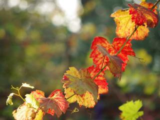 обои Осенняя гирлянда фото