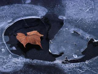 обои Последний осенний листок фото