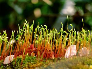 обои Весенняя травка на газоне фото