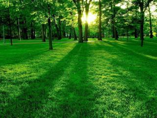 обои Зеленая трава в парке фото