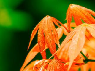 обои Раскрашенные осенью листья фото