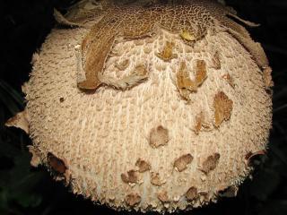 обои Древесный гриб фото