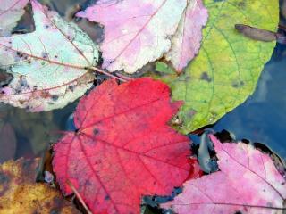 обои Опадающая листва,   осень фото