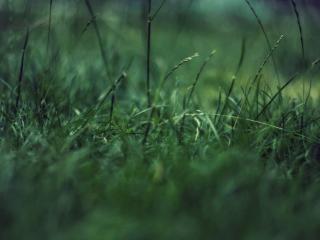 обои Зеленая трава на лужайке фото