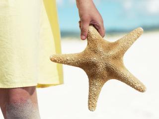 обои Морская звезда в руке фото